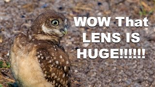 Burrowing Owl Family With the Nikon D500 Nikkor 200-500mm Wildlife Photography