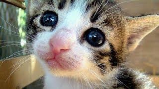 ♥ Cosa c'è nel mio Gatto? ♥