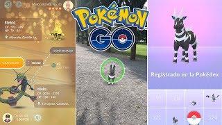 Zebstrika  - (Pokémon) - INTERCAMBIO CON SUERTE Y REGISTRO DE ZEBSTRIKA EN UN NIDO DE BLITZLE! [Pokémon GO-davidpetit]