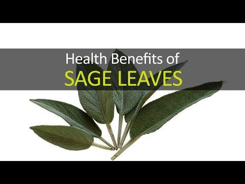 10 Health Benefits of Sage Leaves