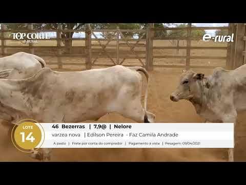 46 BEZERRAS NELORE