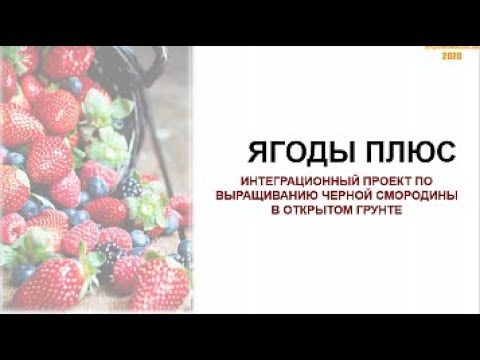 Вебинар Шаг за шагом: Интеграционный проект «Выращивание черной смородины в открытом грунте»