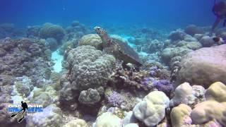 preview picture of video 'GoPro 4 - Mauritius Turtles - Trou aux Biches - Pro Dive Mauritius'