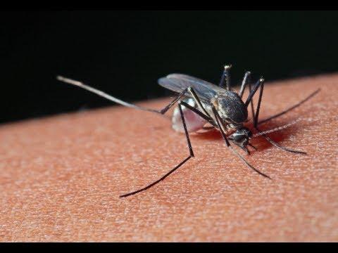 Video How to Treat Mosquito Bites