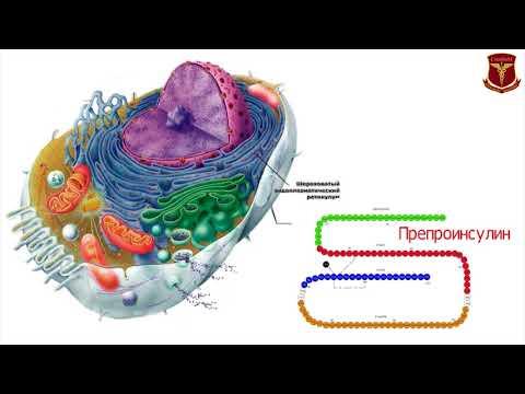 Что способствует развитию сахарного диабета 2 типа