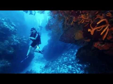Best Scuba Diving in the World, Cozumel, Mexico: Palancar Gardens Wall (HD – 1080p)