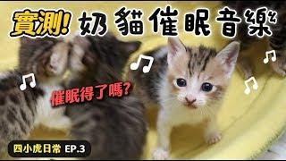 【黃阿瑪的後宮生活】實測!奶貓催眠音樂!四小虎日常EP.3
