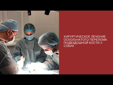 Хирургическое лечение оскольчатого перелома подвздошной кости у собак