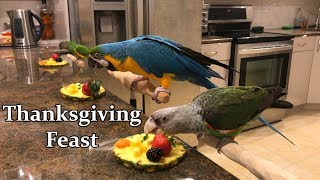 Parrots Enjoy a Thanksgiving Feast