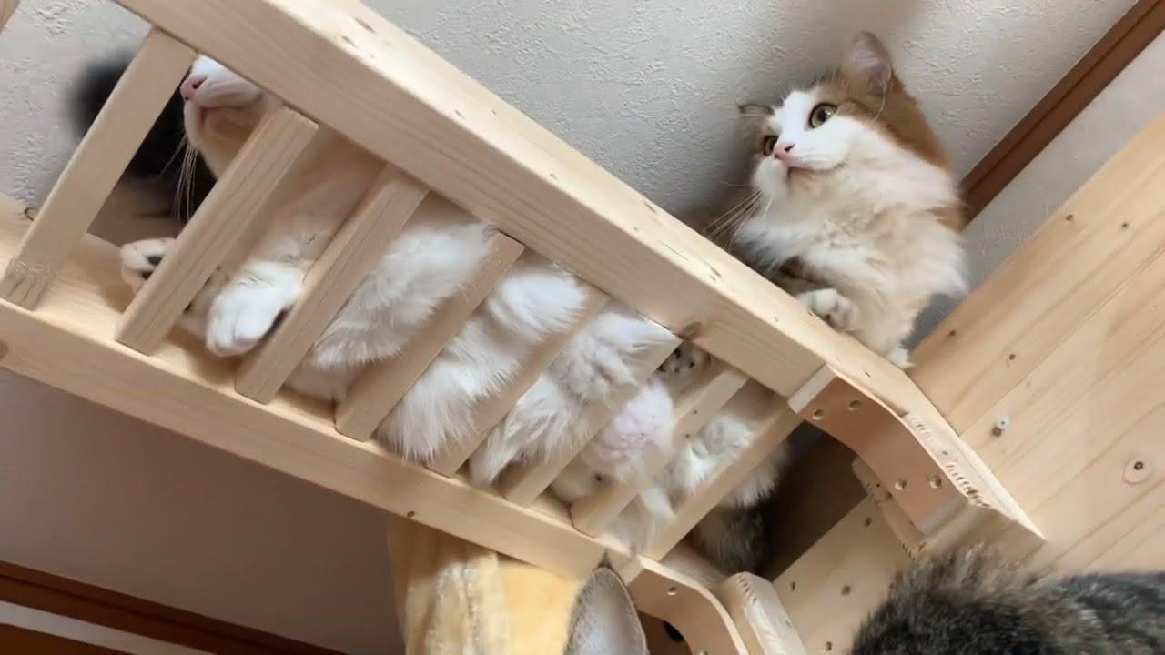 モフモフが溢れでてる猫