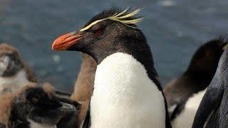 Britain's Treasure Islands Clip on the Falkland Islands