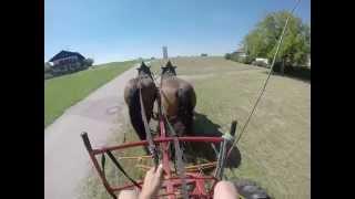 Arbeitspferde In Der Landwirtschaft: Heuernte Teil 1Grummet Kreiseln Heu 2. Schnitt Wenden