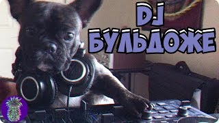 ДИДЖЕЙ БУЛЬДОЖИ   Ананас TV   # 52