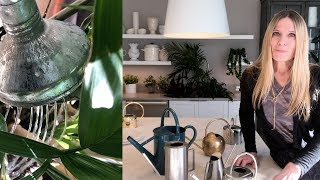 HOW TO WATER INDOOR PLANTS: The Basics