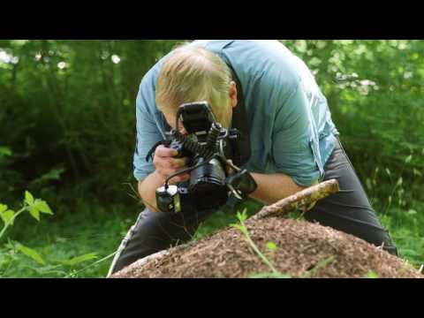 Canon EOS 5DS and EOS 5DS R - Shooting macro