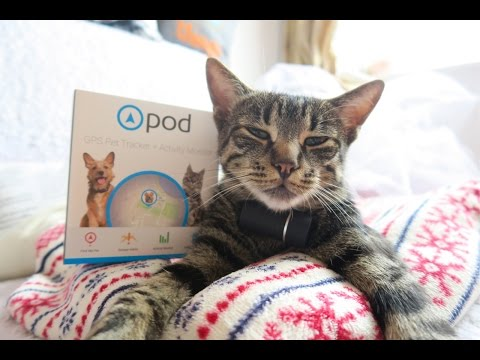 review-of-the-pod-tracker-----keeping-your-pet-safe--dogcat