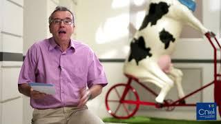 Conjoncture laitière à Août 2018