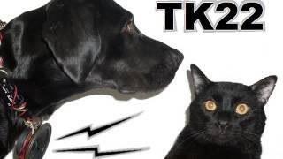 Talking Kitty Cat 22- Dogs Can't Talk