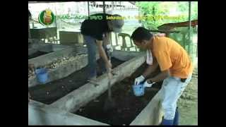 DA-BAR - QAES: How-to - Vermicomposting & Vermiculture