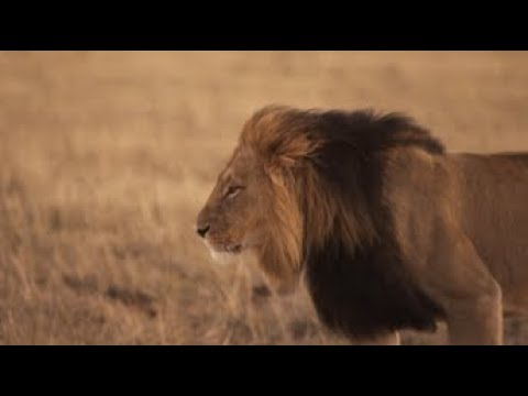 South Africa Big 5 Wildlife & Conservation Video