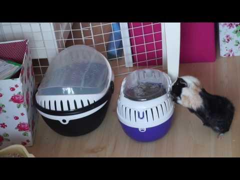 Hamster & Gerbil Cage Swap | Time Lapse | Pets Palace Plus