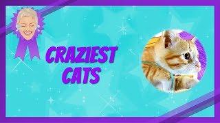 Craziest Cat Videos