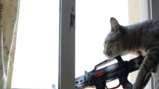 Gato disparando a Personas Sniper Cat EPIC FAILS