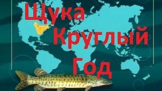 Диалоги о рыбалке удочка на щуку