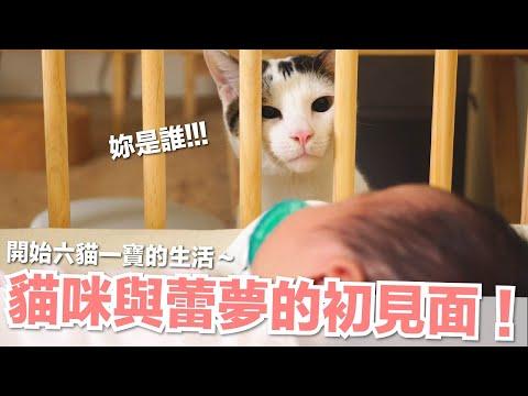 小嬰兒哪有貓跳台好玩
