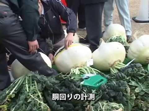 地域イベント~世界一桜島大根