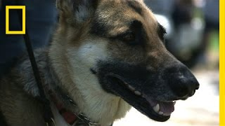 Dog Helps Veteran Cope With PTSD, Diabetes | National Geographic thumbnail