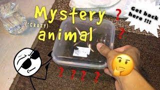 "My new ""CRAZY MYSTERY PET"" !!!"
