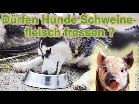 Dürfen Hunde Schweinefleisch fressen ? / Aujeszky-Virus / Pseudowut / Hundefutter / Nature Trails