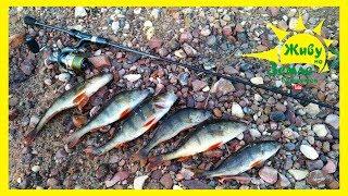 Простой способ поймать рыбу на спиннинг. Рыбалка видео на спиннинг в прямом эфире :)