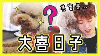 【🐶BROWNIE突發驚喜】知道今天是什麼「大喜日子」嗎!?(中字)
