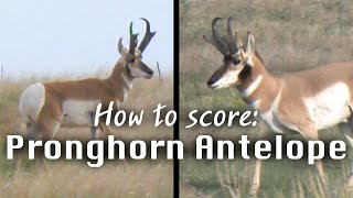 How to Judge Antelope in the Field - Mike Eastman's Trophy Hunting Tips