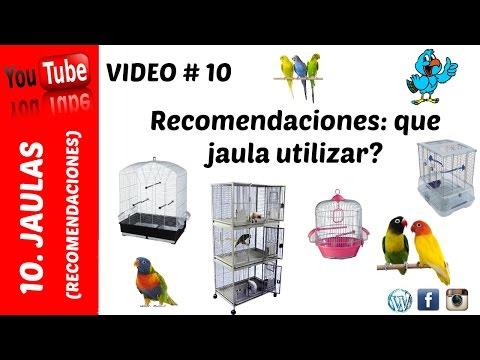 Jaula - Recomendaciones