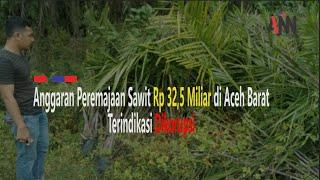 Kejati Usut Kasus Replanting Sawit
