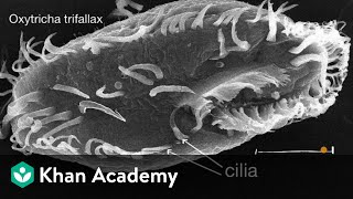 Introduction to cilia, flagella and pseudopodia | Cells | High school biology | Khan Academy