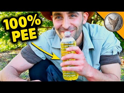 Video Can PEE Cure Ant Stings?!