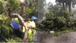 Kronologi Sepasang Suami Istri Jadi Korban Karena Tertimpa Pohon Tumbang di Malang