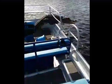 В США в штате Флорида аллигатор запрыгнул в лодку