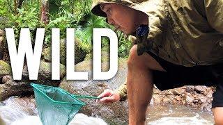 Catching Wild Fish for an Aquarium in Hawaii
