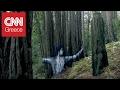 Τέχνη με συμβολισμούς πάνω στους καμένους φλοιούς των δέντρων