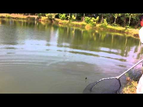 Tackle Thai Lure/Fly Testing Session at Amazon II