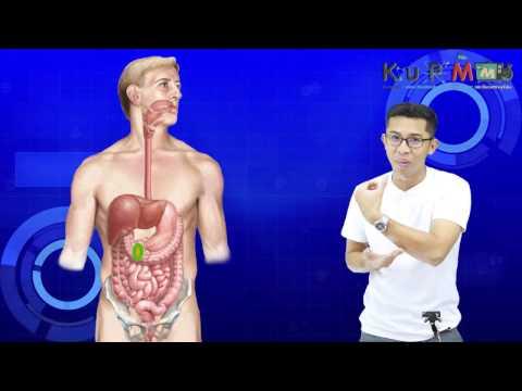 ผ่านการทดสอบสำหรับปรสิตในร่างกายมนุษย์