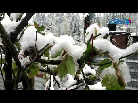 Ski resort Gulmarg receives fresh snowfall