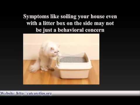 Video Cat Illnesses - cat care and sick cats