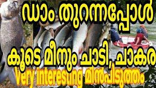 ബാണാസുര ഡാമിലെ മീൻ കൊയ്ത്ത്/Banasura Sagar Dam fishing/heavy fishing banasura Sagar dam/fishing/rive
