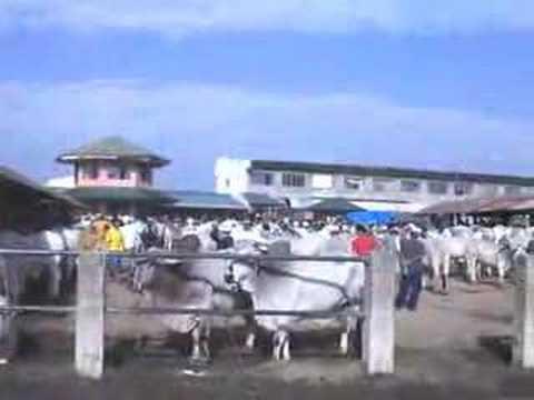 Halamang-singaw sa anyo ng mga paltos sa paa